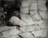 Snail Crossing, Bromoil