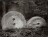 Millstones, Bromoil
