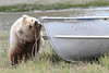 Brown_Bear_Tweens_Alaska (27)
