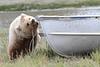 Brown_Bear_Tweens_Alaska (27)