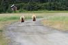 Brown_Bear_Tweens_Alaska (33)