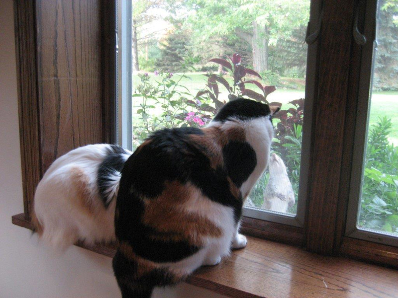 """THE MENDOTA MISSUS: """"Sometimes patience pays off. Rosie and her new cat buddy Trouble (on the left), patiently waited for a bird or squirrel to excite them. Cats are so entertaining."""""""