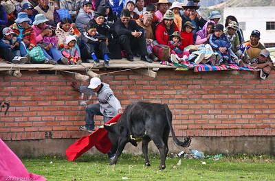 Bull winning !