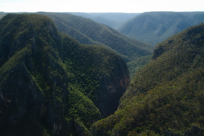 Bungonia Forest