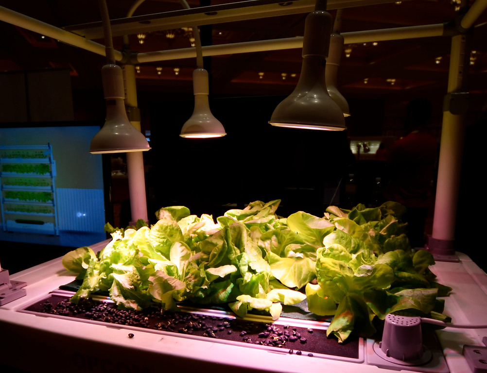 . Jan 6, 2017. Las Vegas NV.  Opcom Farm growBox is seen during ShowStoppers show at the 2017 CES show. CES  celebrates it\'s 50th anniversary this year with a estimated 175,000 to attend the four day show that starts Jan 5th to the 8th. Photos by Gene Blevins/LA Daily News/SCNG