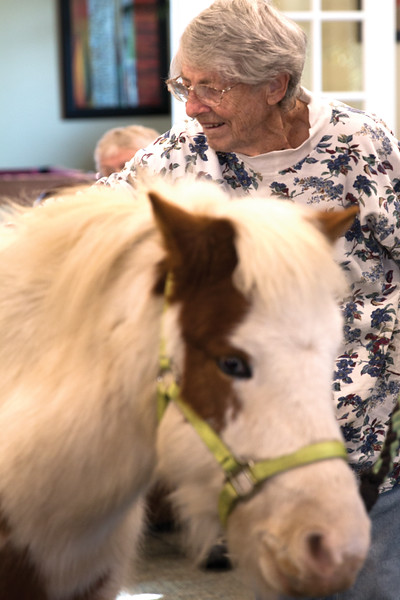 Matthew Gaston | The Sheridan Press<br>Beverly Ballard brushes Feather the pony at The Hub Thursday, Nov. 15, 2018. The Hub in conjunction with CHAPS Equine provide seniors the opportunity to engage in equine assisted therapy.