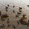 Wild birds on the lake