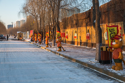 Harbin Siberian Tigers