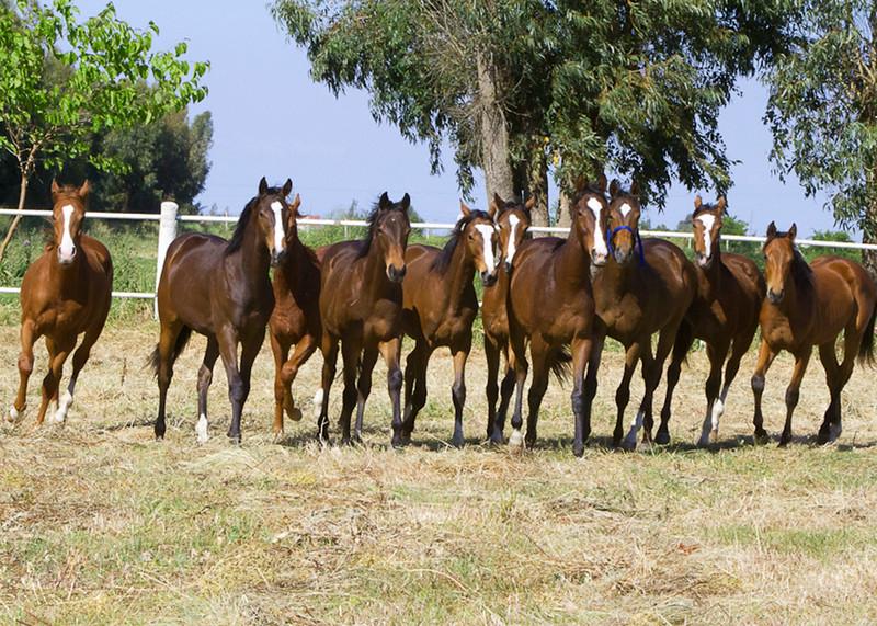 herdMoroccoIMG_3055