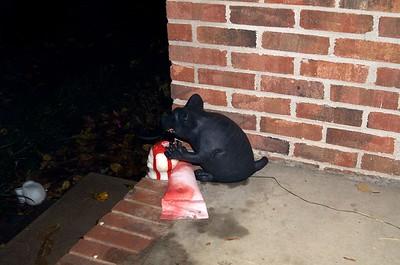 Clark Halloween 2013