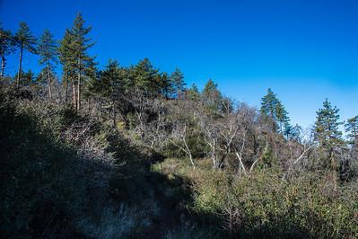 20150208Noble Canyon_DSC2897-Edit