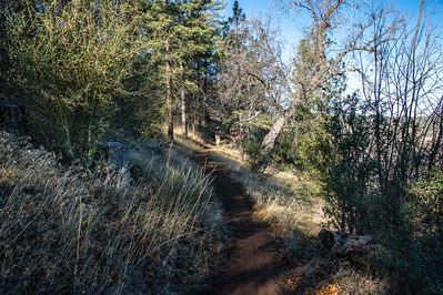 20150208Noble Canyon_DSC2907-Edit