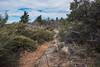 2016Sunset Trail-DSC_3353-2