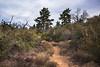 2016Sunset Trail-DSC_3357-2