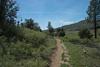 20160414Harvey Moore Trail3232