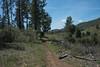 20160414Harvey Moore Trail3235