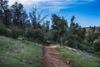20160414Harvey Moore Trail-2