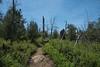 20160414Harvey Moore Trail3230