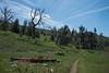 20160414Harvey Moore Trail3237