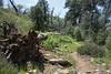 20160414Harvey Moore Trail3238
