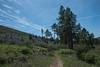 20160414Harvey Moore Trail3234
