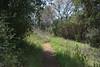 20160414Harvey Moore Trail3223
