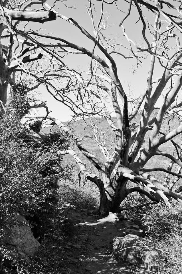 Stonewall Peak-4823