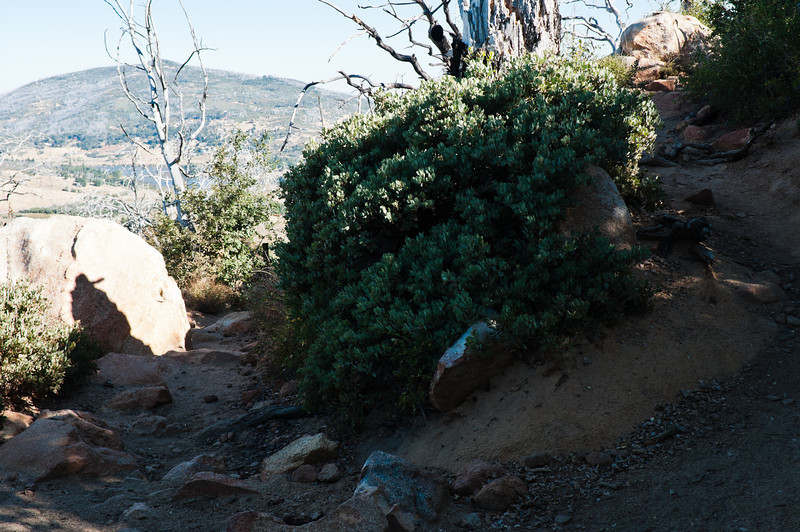 Stonewall Peak-4810