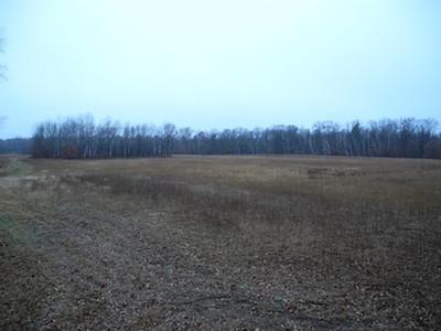 Grandma's Field