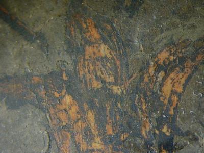 Zwischenzustand: Hegner Altar, Nikolaus, Gewand, roter Bolus und oxidierter Silber mit grünem Überzug.  AAF_0024_01-01-1999