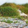 Dune Grass<br /> Deveaux Bank<br /> Edisto Island, SC