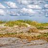 Dune Scrub #2<br /> Deveaux Bank<br /> Edisto Island, SC