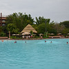 Swimming pool at Disney Animal Kingdom Resort