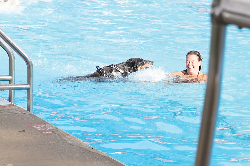 Matthew Gaston | The Sheridan Press<br>Doberman, Vito, swims after his person Katie Gaddy during the dog swim at Kendrick Pool Saturday, Aug. 24, 2019.