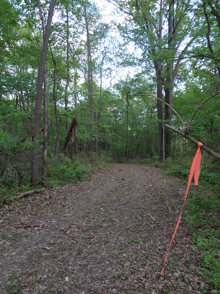 Here is what the same area looks like after complete removal of all vegetation down to the bare soil.  This isn't trail building, folks.  This is road building.  This used to be a peaceful, serene place at the crest of a hill where deer paths converged.  Now it's a dirt highway.