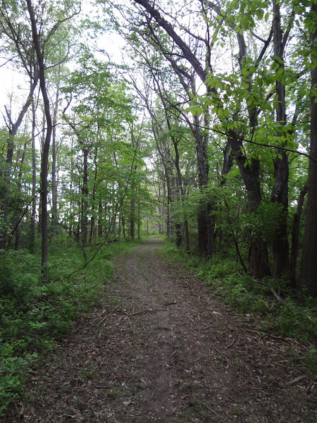 Did this beautiful, natural area need a road through it?
