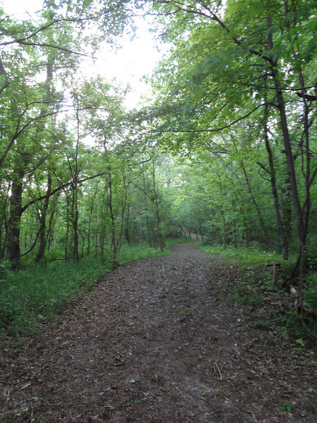 This isn't a trail or a trail running course.  It's a road through the woods.