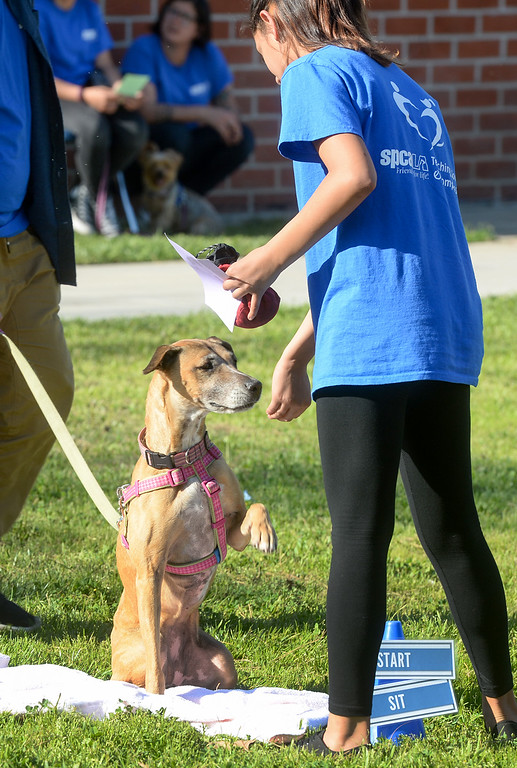 """. Star Mejia has \""""Lina\"""" do a trick as they graduate from the four-week Teaching Love & Compassion (TLC) training program at Graves Middle School in South Whittier on Thursday March 9, 2017. Students show what they have learned as they take the shelter dogs through an obstacle course showing off the tricks they have taught the dogs. (Photo by Keith Durflinger/Whittier Daily News/SCNG)"""