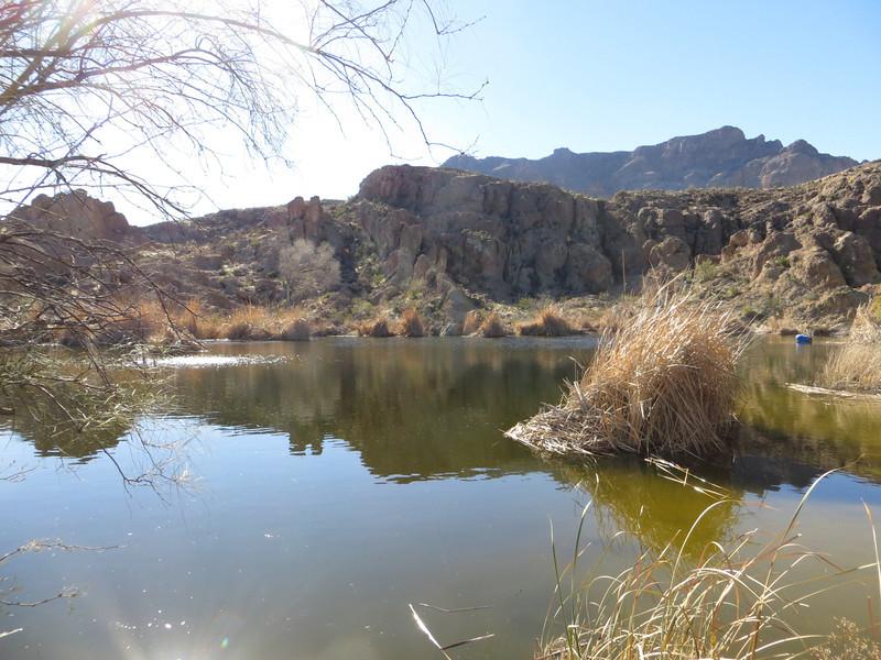 Boyce Thompson Park pond