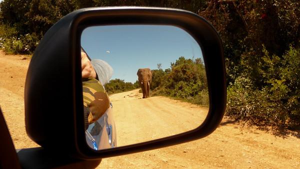 Mirror Elephant, Addo Elephant Park, South Africa.