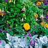 Hyde Park flowers - London, England