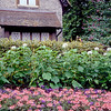 Garden detail - Hyde Park - London, England