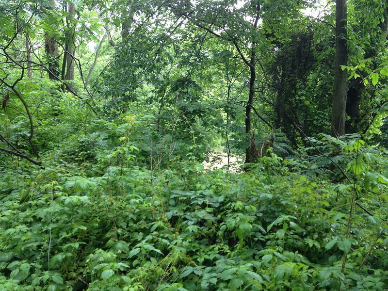 Views of the Thames through vegetation.