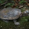 sn 698.  Bog Turtle