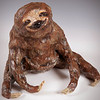 sn 650.  Pygmy Three-toed Sloth