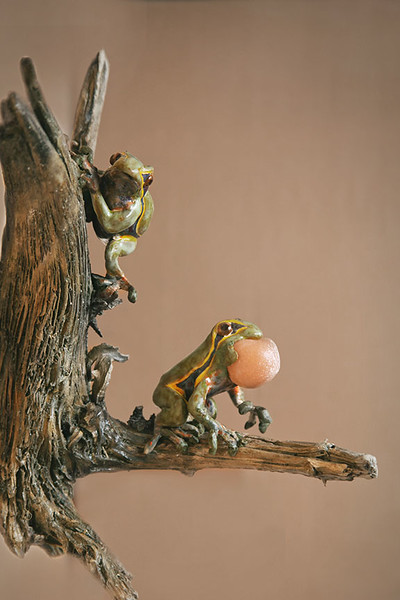 sn 411. Pine Barrens Tree Frog