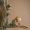 sn 411. Pine Barrens Tree Frog