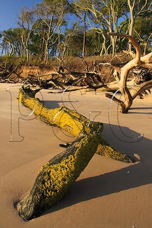 FL JACKSONVILLE BIG TALBOT ISLAND STATE PARK BONEYARD BEACH APRAB_MG_5726MMW