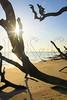 FL JACKSONVILLE BIG TALBOT ISLAND STATE PARK BONEYARD BEACH APRAB_MG_5701MMW