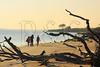 FL JACKSONVILLE BIG TALBOT ISLAND STATE PARK BONEYARD BEACH APRAB_MG_5638MMW